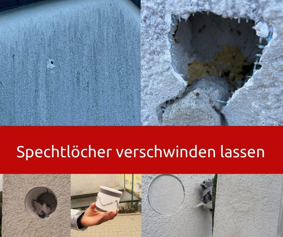 Bild: So reparieren wir Spechtlöcher